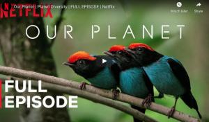 Our Planet | Planet Diversity | Netflix