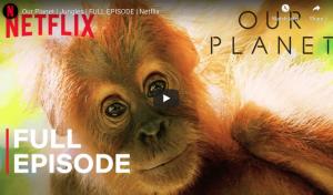 Our Planet | Jungles | Netflix
