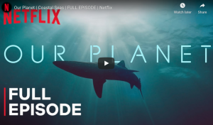 Our Planet | Coastal Seas | Netflix