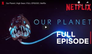 Our Planet | High Seas | Netflix